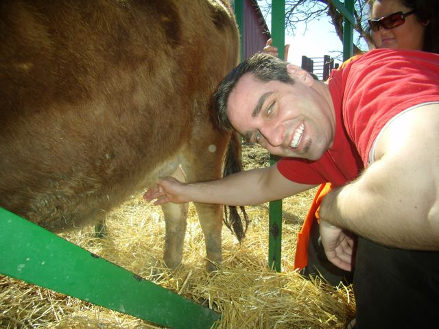 vince milking cow